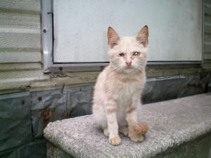 Heimatlose Katze - PETA