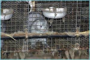 Pelztier im Käfig