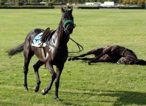 Pferderennen Partei Mensch Umwelt Tierschutz