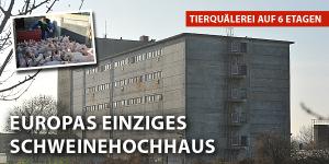 Fotoquelle: Deutsches Tierschutzbüro