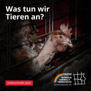 Was tun wir Tieren an - Huhn