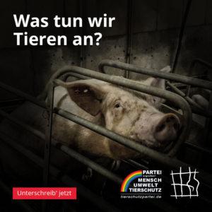 Was tun wir Tieren an - Schwein
